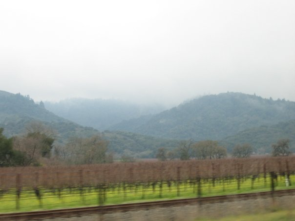 wine hills in Napa