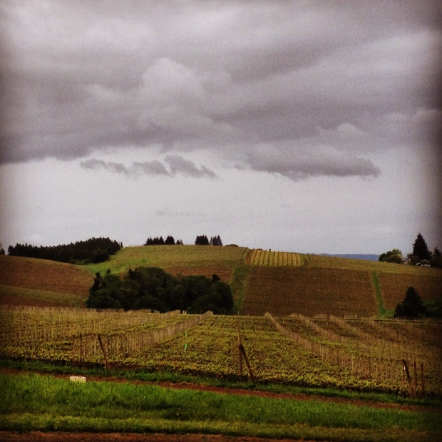rolling hills of the vineyards